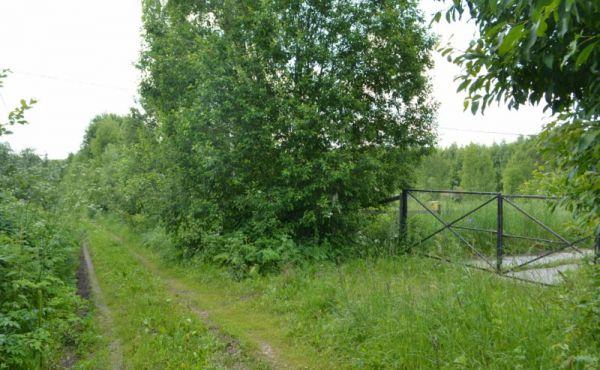Участок в тихой красивой деревне в окружении леса